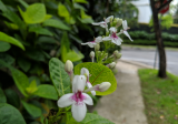 Hua Guan Garden - Property For Rent in Singapore