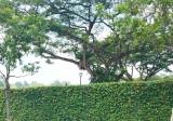 Unblocked View Freehold  Land - Property For Sale in Singapore