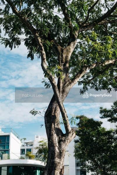Sixth Ave 10000sqft land with botanic garden #115852890