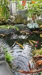 Yugi Garden